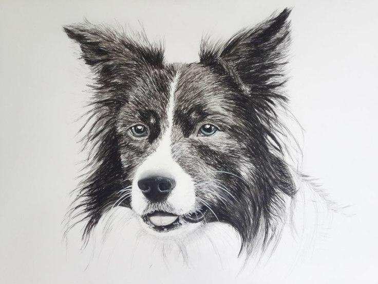 border-collie-pastel-portrait