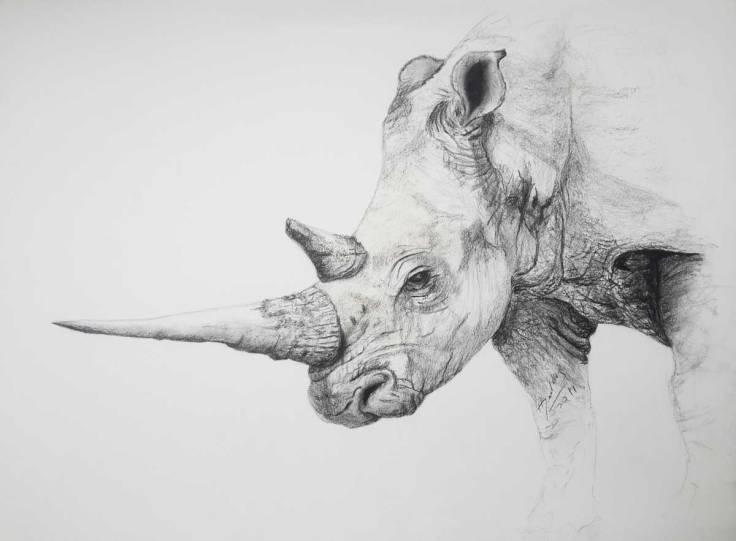 Gogo-Rhino-w.jpg