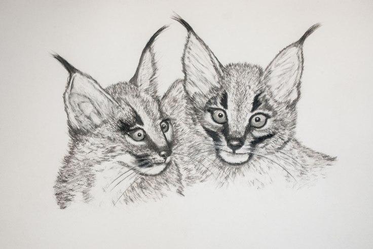 Shamwari_Caracal_Kittens_pastel